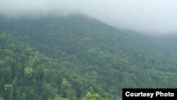 Armenia -- Teghut forest in Lori province.