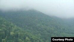Թեղուտի անտառը, արխիվ