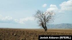 Кыргызстандагы жаз.