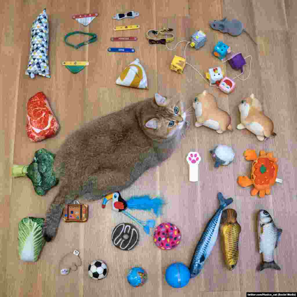 А так виглядає флешмоб від котика