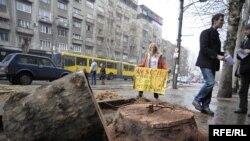 Уничтожение знаменитых белградских платанов возмутило жителей города