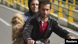 A dog makes his getaway in this file photo from Tehran.