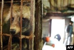 """Kineska vlada je 1988. promenila zakon, definišući po prvi put divlje životinje kao """"prirodni resurs"""" koji se može koristiti za sopstvene potrebe (fotografija sa tržnice divljih životinja u Guangzhou)"""