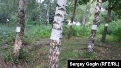 Деревья, помеченные для пересадки