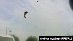 Хоразмликлар Мирзиёев келишига ҳозирланмоқда