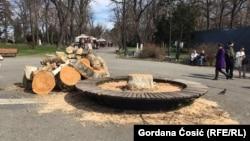 Posečena stabla kao priprema terena za gradnju gondole