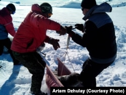 Взважування тюленя