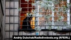 Пацієнт «важкого» відділення у загратованому вікні Київської міської психіатричної лікарні № 1 імені Павлова