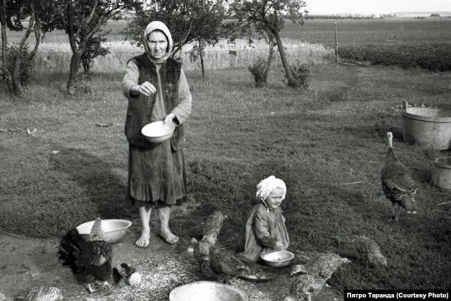 Маці Петрыка Ганна Таранда корміць птушанят, вёска Зарытава, 1952 год