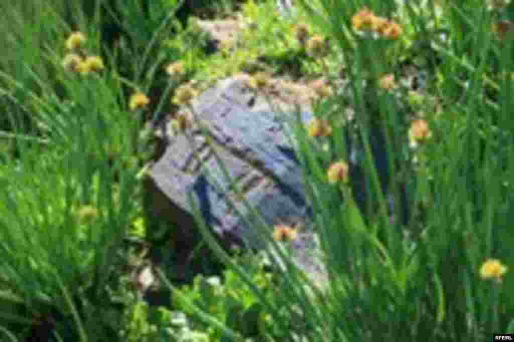 Саймалуу-Таш или расшитые камни Тянь-Шаня #19