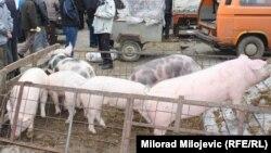 Свиньи. Иллюстративное фото.