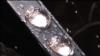 NASA суны авырлыксызлыкта сынаган