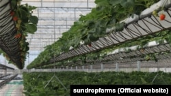 مزرعه ساندراپ در استرالیا