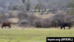 На лужайке «Нижнего парка», где раньше располагался зоосад, теперь пасутся коровы