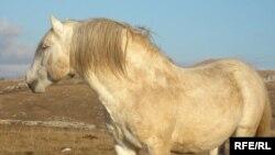 Livanjski divlji konji galopiraju ka zakonskoj zaštiti