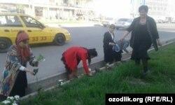 Андижанские учителя сажают цветы вдоль автомобильных дорог перед визитом президента Шавката Мирзияева в Андижанскую область. 6 апреля 2018 года.