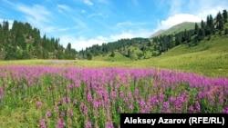 Кокжайляу в летний период. Алматы, 22 июля 2012 года.