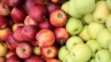 """""""Očekuju se izuzetno visoki prinosi"""", kaže Dragoja Dojčinović (na fotografiji: dvije sorte jabuke)"""