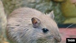 Мыши и Крысы становятся московской достопримечательностью