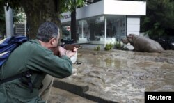 Сотрудник зоопарка пытается усыпить сбежавшего во время наводнения гиппопотама, 14 июня 2015
