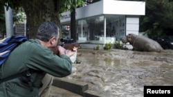A man shoots a tranquilizer dart to put a hippopotamus to sleep on a flooded street in Tbilisi following a deadly flash flood. Animals from the city's zoo, including tigers, lions, bears, and wolves escaped from cages damaged by the rainfall. Some were captured or killed while the search for others goes on. (Reuters/Beso Gulashvili)(Re