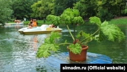 Плаваючі клумби в ставку парку імені Гагаріна