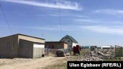 Айдоого түшкөн конуш. Бишкек