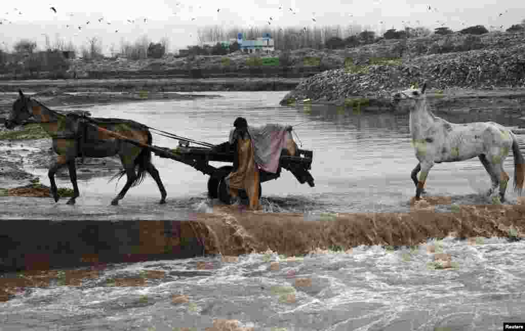 A man and his horses cross a seasonal stream in Choha Gujar village on the outskirts of Peshawar, Pakistan. (Reuters/Khuram Parvez)