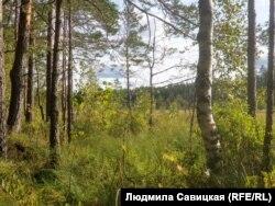 В лес сейчас лучше не ходить: вероятность подцепить клеща слишком высока
