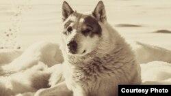 Убитый пес Чак. Фото предоставлено хозяевами.