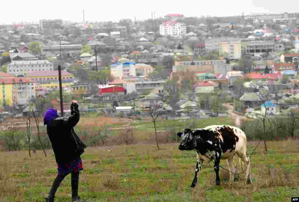 A woman and her cow near the city of Comrat