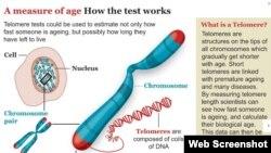 برخی از پژوهشگران می گویند با آزمایش خون می توانند به افراد اطلاع دهند که با چه سرعتی پیر می شوند.