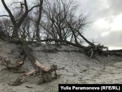 Размытый берег на Балтийской косе