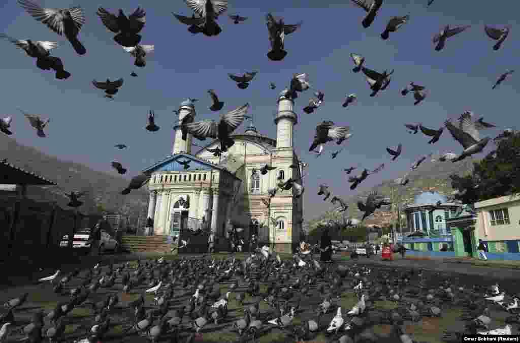 Pëllumbat afër xhamisë në Kabul, Afganistan.