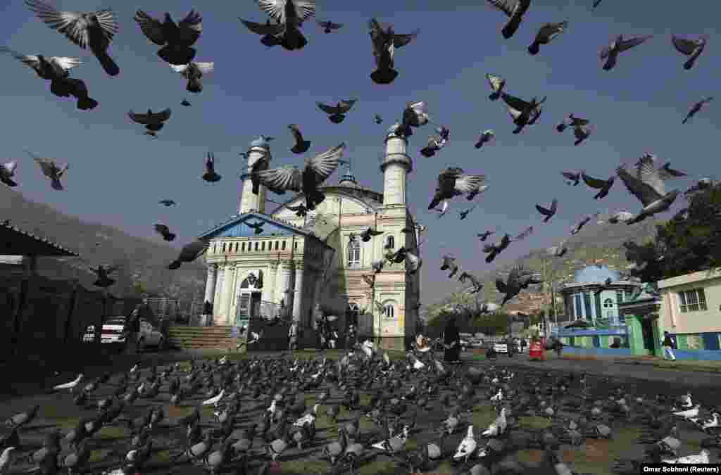 Pigeons take to the air outside the Shah-e Doh Shamshira Mosque as Afghans head for morning prayers in Kabul. (Reuters/Omar Sobhani)