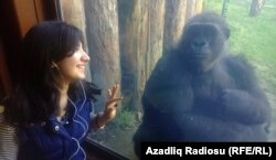 Budapeşt zooparkı