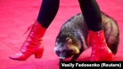 17 вересня в Одесі вперше в Україні заборонили циркових тварин – до усунення недоліків тримання (фото ілюстративне)