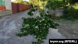 Архивное фото: упавшая часть дерева из-за сильного ветра в Симферополе, 6 июня 2016 года