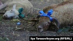 Жертвенные животные, архивное фото