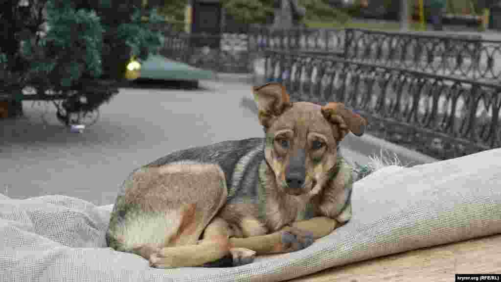 Бездомной собаке кто-то постелил старое напольное покрытие