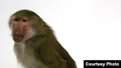 """Стиль арт-группы «Синие Носы» отличается брутальным юмором. [Фото — <a href=""""http://www.arba.ru/"""" target=""""_blank"""">arba.ru</a>]"""