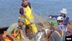 Dünyada satılan kürünün 90 faizi Xəzər dənizinin payına düşür