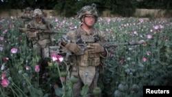 Американские солдаты в провинции Кандагар бредут по маковому полю