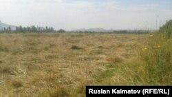 Бул жерди буга чейин Кыргызстан пайдаланып келген.