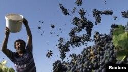 В целом эксперты признают большой потенциал аграрного сектора Грузии. Хороший климат способствует тому, чтобы осуществлять экспорт фруктов в летнее время, а зимой – овощных культур. Однако на развитие отрасли потребуется немало времени и средств