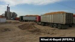 شاحنات محمّملة بالذرة في كركوك