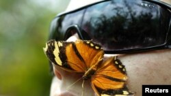 A monarch butterfly lands on the face of a man at the National Institute of Biodiversity in Costa Rica, which won the Future Policy Award 2010 in celebration of its biodiversity law as a milestone of excellence in meeting the goals of the UN Convention on