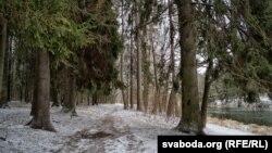 У Пячэрскім лесапарку