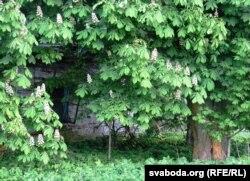 """""""Панскі двор"""" у Міцькавічах. Апошняе акно. Травень 2016."""