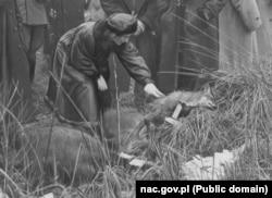 Жонка міністра замежных справаў Італіі Эда Чана каля ўпаляванага ёю трафэя. Белавеская пушча, 1939 год.